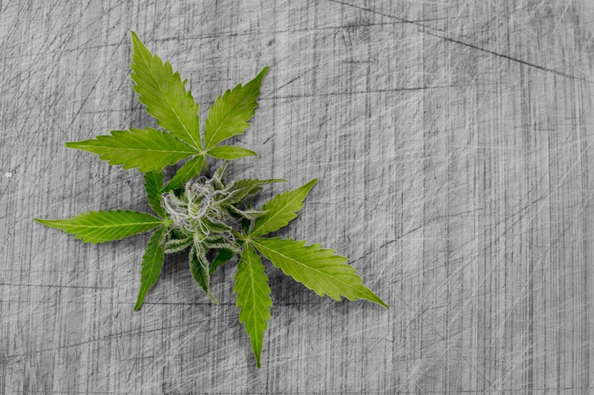FDA Approves Use of Marijuana Derived CBD Drug for Epilepsy on Eve of 4-20
